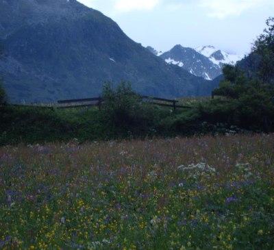 Blumenwiese im Oberbergtal