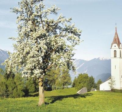 Blick auf Pfarrkirche in Mösern