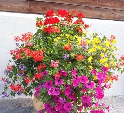 Blumenpracht_Alberhof