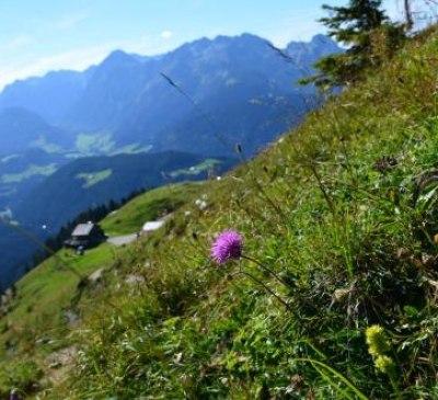 Apartments Alpenfrieden, © bookingcom